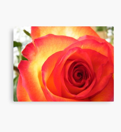 Red and Yellow Rose Canvas Print