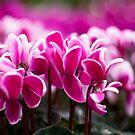 Pink!!! by Karen Havenaar