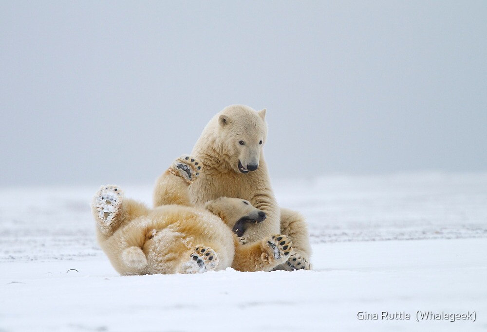 Playtime For Polar Bears by Gina Ruttle  (Whalegeek)