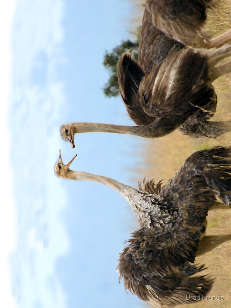 Ostrich talk - iphone cover by bfra