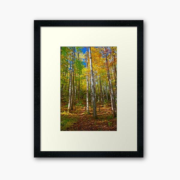 Invitation to a Quiet Walk Framed Art Print