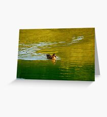 Here Ducky Ducky Greeting Card