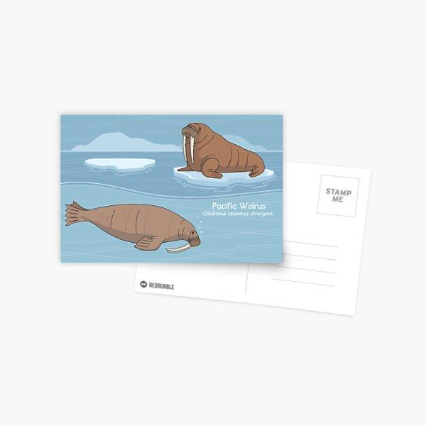 Pacific Walrus Above & Below Postcard