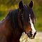 An Equine Portrait