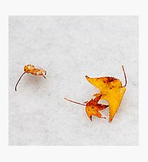 Nature is painting on white canvas Photographic Print