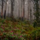 Majesty - Mount Wilson NSW - The HDR Experience by Philip Johnson