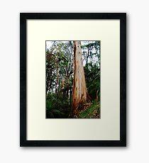 Mountain Magic Framed Print