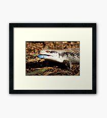 australia reptile Framed Print