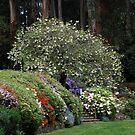 Spring Garden by Clare McClelland