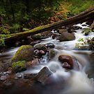 Oneonta Creek II by Tula Top