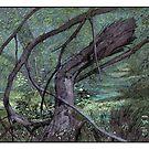 Fallen branch by David  Kennett