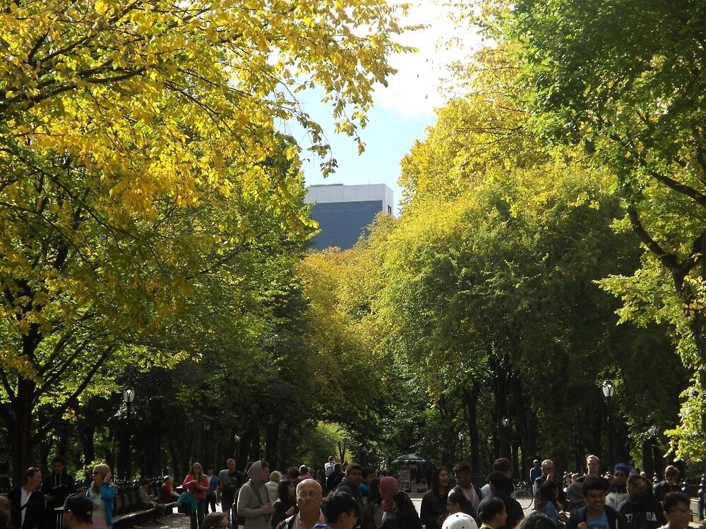 Autumn Colors, Central Park, New York City by lenspiro