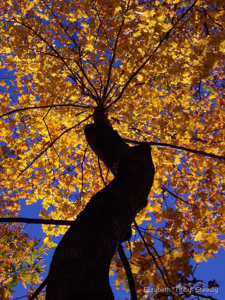 Fall Majesty by Tibby Steedly
