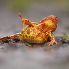 The frog. by Fred Taylor