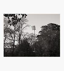 Invasion of the Mechanoid Tree Photographic Print