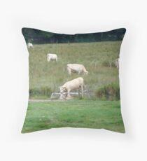 Charolais Cows - Limousin, France Throw Pillow