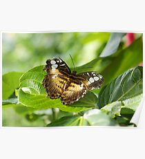 Butterfly - Butterfly Conservatory - Niagara Falls, Ont. Poster