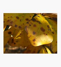 Fall Leaves Series Photographic Print