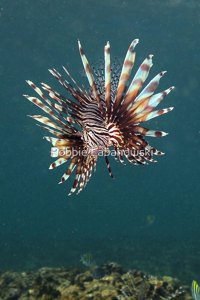Lionfish by Robbie Labanowski