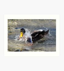 Splashing-Duck Art Print