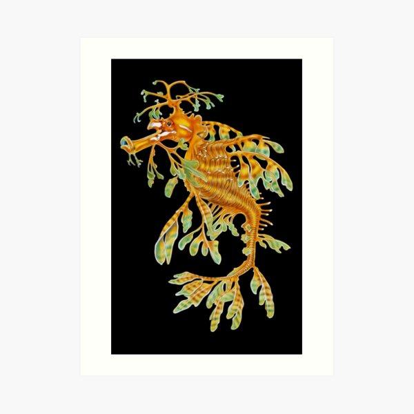 Leafy Seadragon Art Print