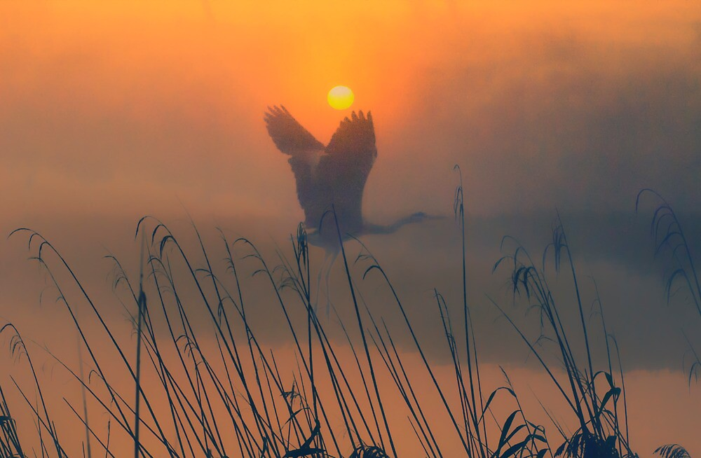 In The Mist 4 by THHoang