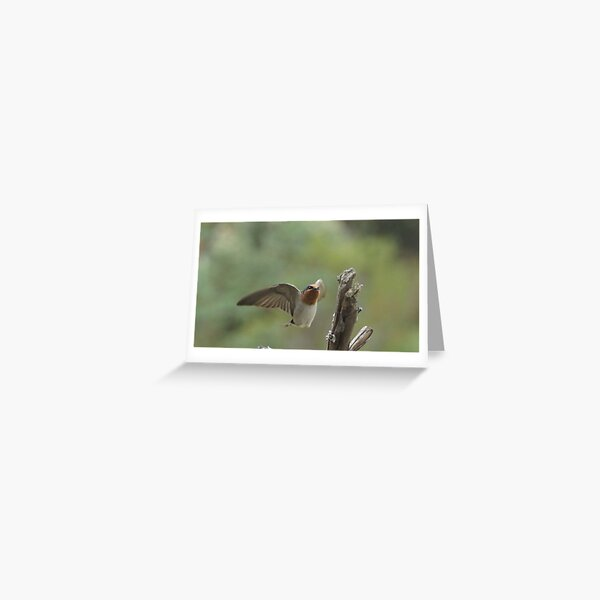Swallow approaching perch Greeting Card