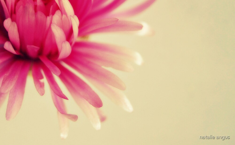 delicately pink by natalie angus