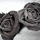 Dried Roses B&W by karenkirkham