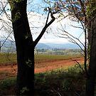 Post February 2009 Bushfires - near Yarra Glen VIC  by Emmy Silvius