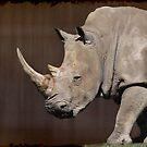 White Rhinoceros by NewfieKeith