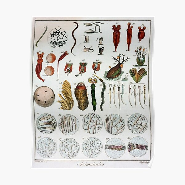 Vintage scientifc microbiology chart poster retro Poster
