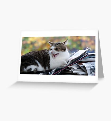 """Paper Girl: """"You Dare....."""" Greeting Card"""