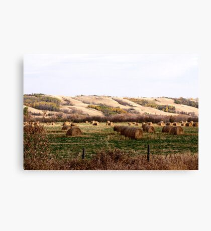 Valley Of The Bales Canvas Print