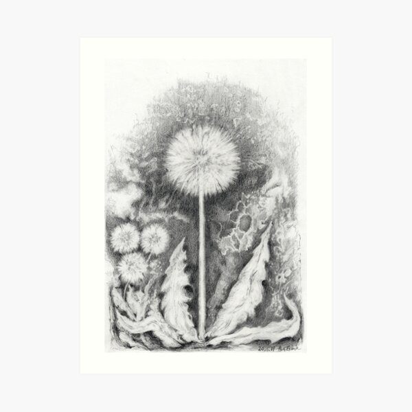 Dandelion with seeds Art Print