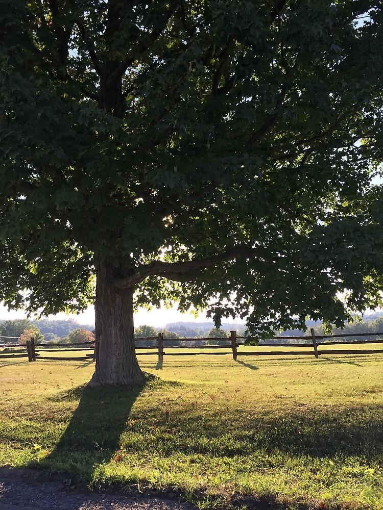 A VT Tree by amogulskier
