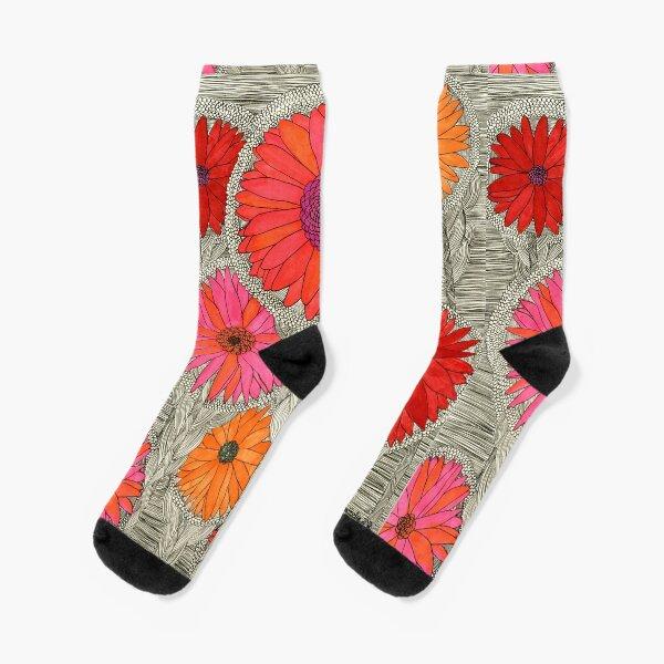 Gerbera Dasies- Red Socks