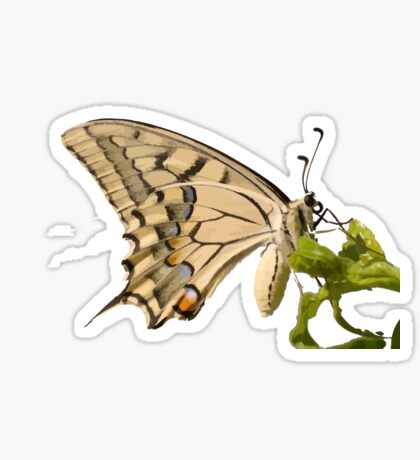 Swallowtail Butterfly Vector Isolated Sticker