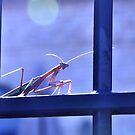 Mantis by Polly Greathouse