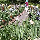 Lady Walking in a Iris Garden in Spring by Paula Betz