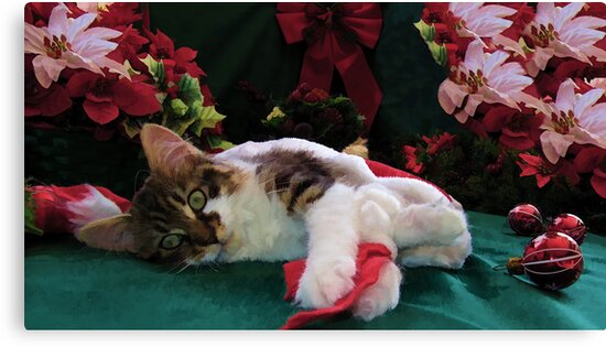 Christmas Maine Coon Kitty Cat w/ Big Eyes ~ Cute Feline Kitten w/ Paws Stretched Waiting for Santa Claus on Xmas Eve by Chantal PhotoPix