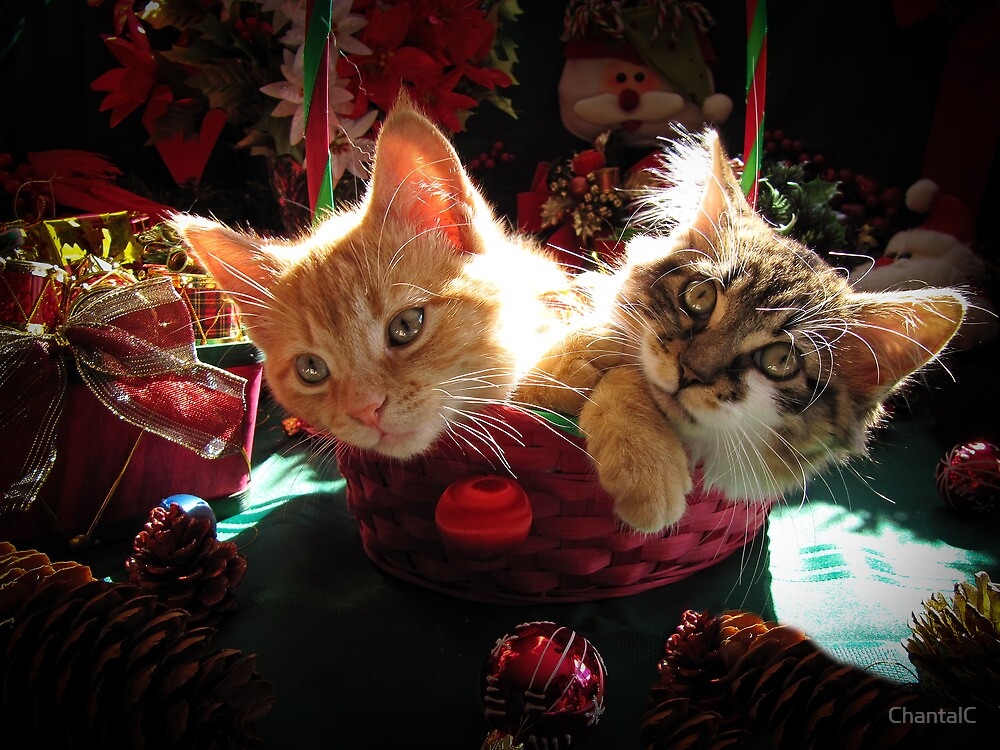 quotchristmas basket of two kittens in love portraits of