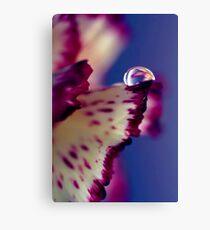 Colour Of Life XXXII [Print & iPad Case] Canvas Print