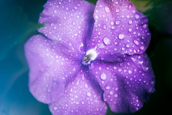 Closeup  of a flower by Rob D