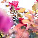 Final Fall Bokeh by Farah  Rose