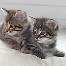 Sweet Kittens by Paul Murray
