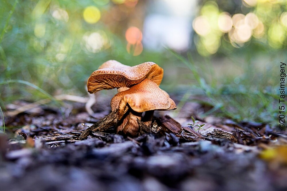 Fungi in NSW by tasimagery