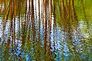 Pond Patterns by Extraordinary Light
