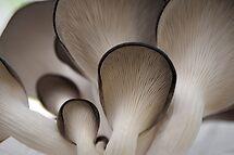 Mushrooms by Janice Chiu