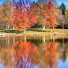 Sodalis Nature Park Maple Tree by David Owens